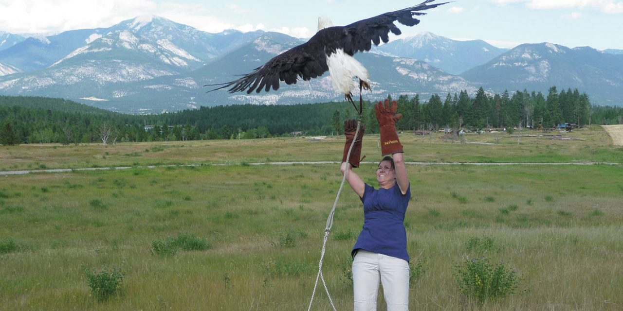 Cage helps birds of prey regain their freedom