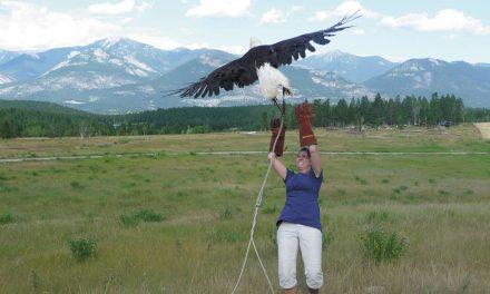 Cage helps birds of prey regain their freedom