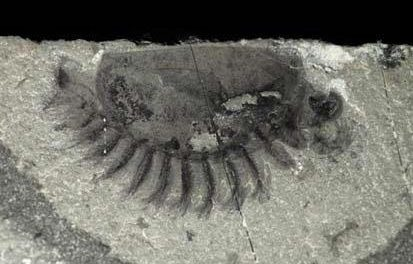 Epic animal fossil discovery in Kootenay National Park