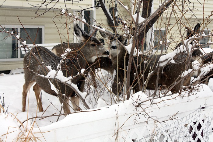 No easy solutions to deer issue