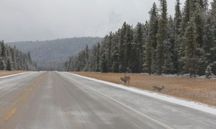 Overpass planned for Kootenay National Park