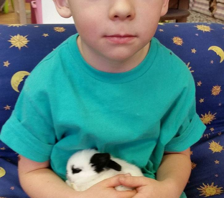 Surprise pets provide learning opportunity for local daycare