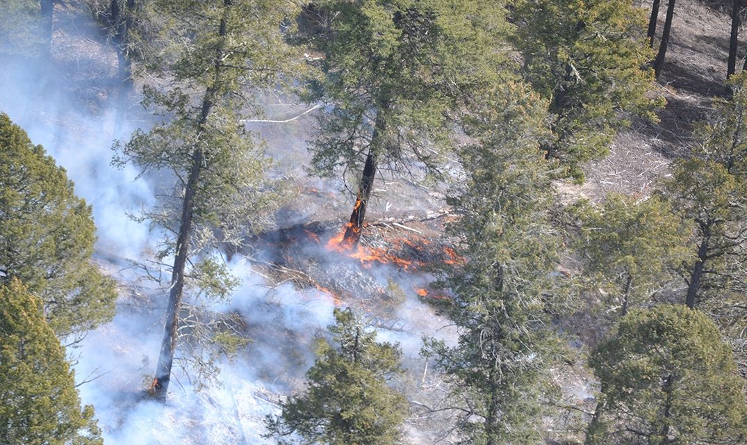 Parks Canada lights fire in Kootenay National Park