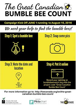 You can help save the bees