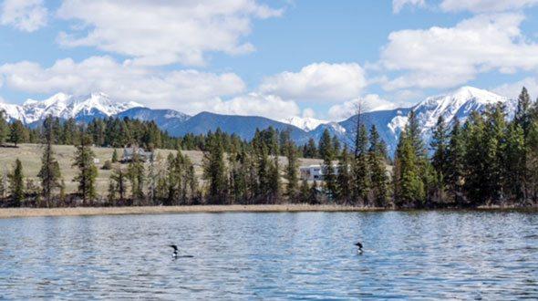 Loons of Lake Lillian