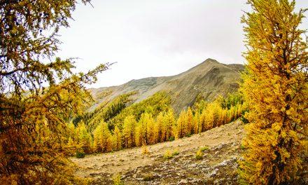 Peak mountain experience