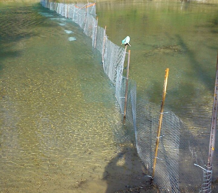 Hatchery fence takes river users by surprise