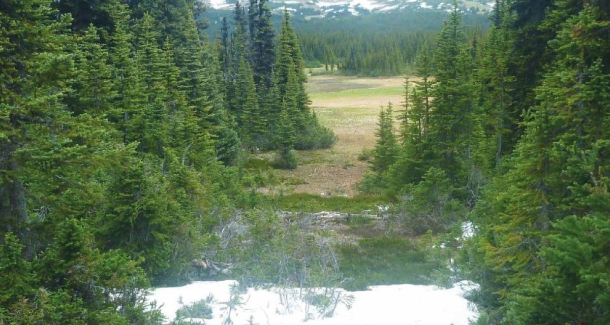 Province's response to old growth forest report falls short, says Nelson scientist