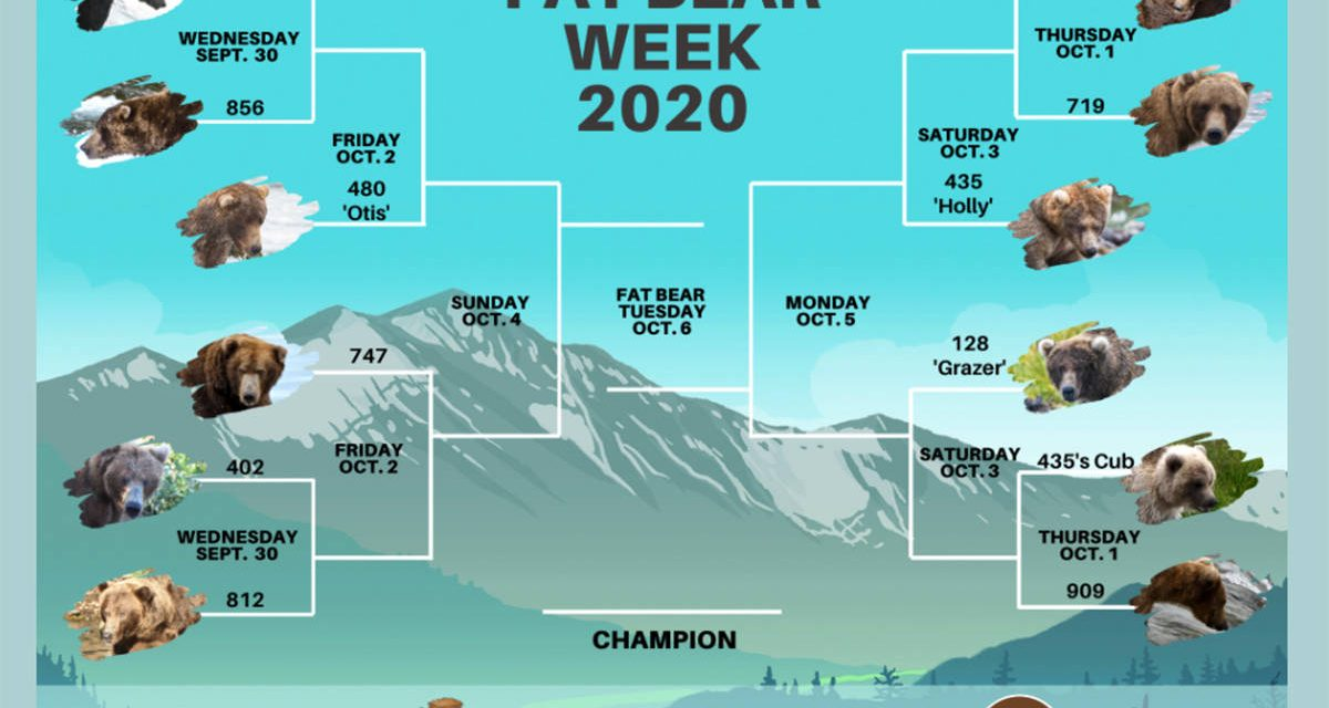 The holiday everyone needs this year: Vote for your favourite in Fat Bear Week 2020