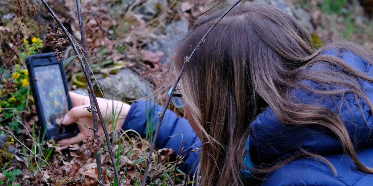 BC Parks Foundation has collected 950,000 wildlife pics, thanks to outdoor enthusiasts