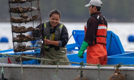 Great Bear Scallops winners of B.C. Sustainability Award