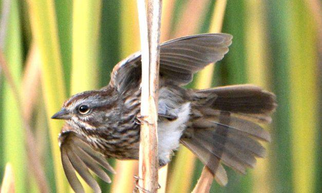 Urban wildlife Part I: The East Kootenay birds of summer