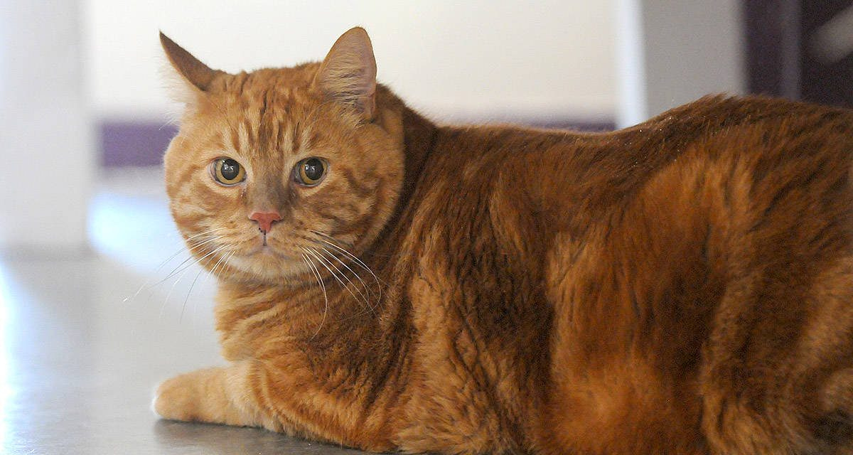 Animal obesity: Tips for tackling weight issues in pets