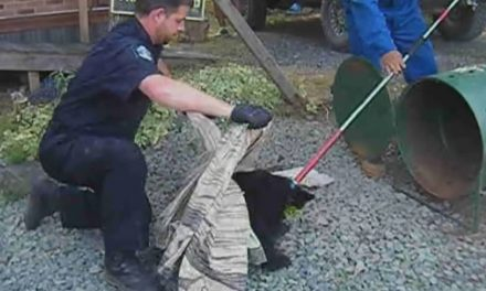 B.C. union takes ex-conservation officer who refused to kill 2 bears back to court