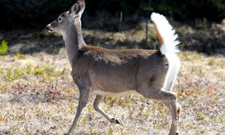 Public asked to help with wildlife count