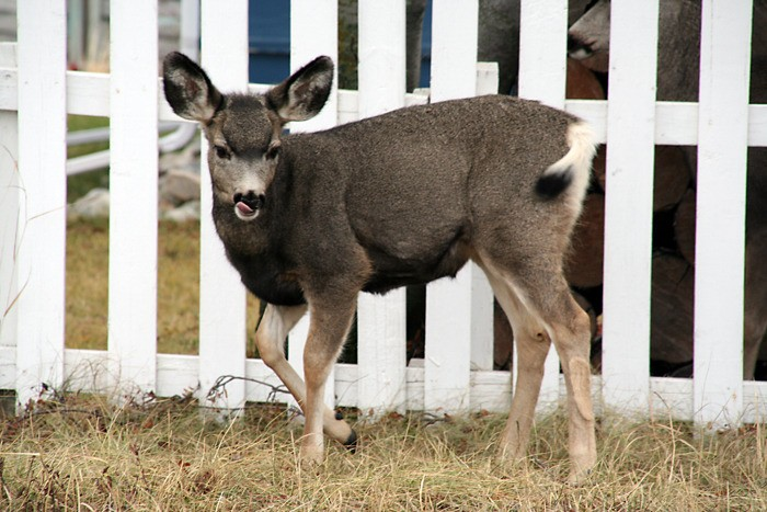 Aggressive deer cases all dog-related