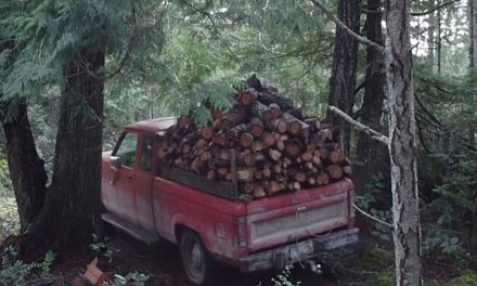 Crown land firewood collectors urged to get permits