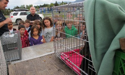 Orphaned Invermere bear cub flown to Smithers wildlife centre