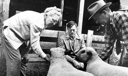 Three people with sheep
