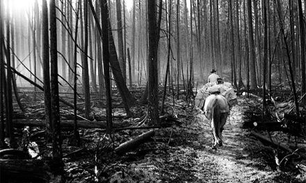 Through charred forest by horseback