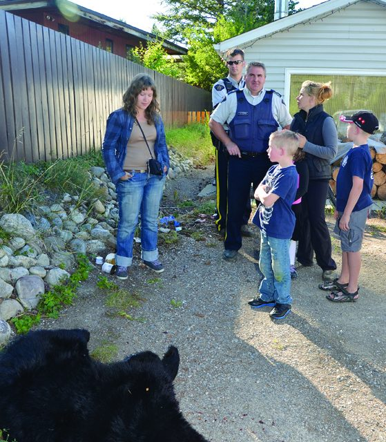 Black bears and cubs destroyed in Invermere