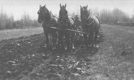 Tilling the field, 1918