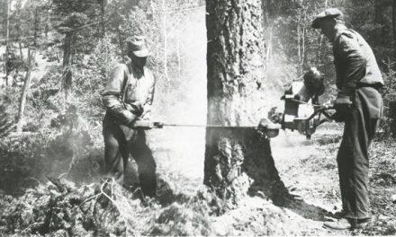 Cutting edge chainsaw