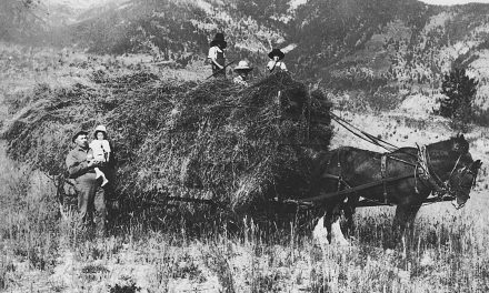 Whole lotta hay