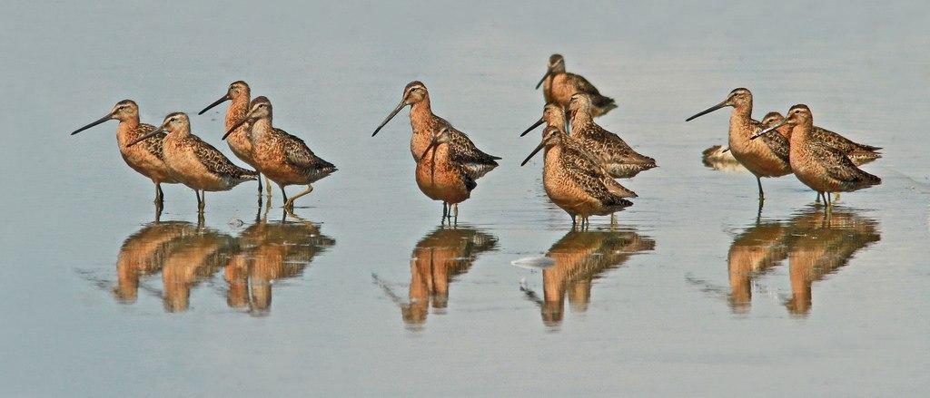 One-third of bird species in danger