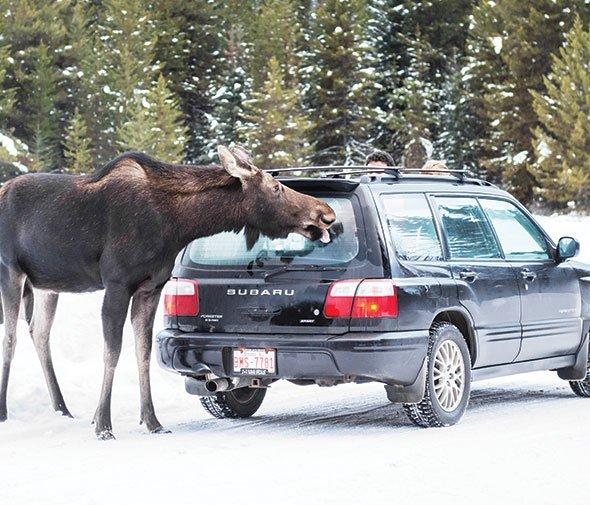 Subaru Smooch