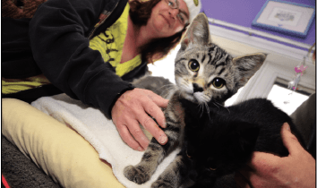 Invermere Companion Animal Network Looking for Volunteers