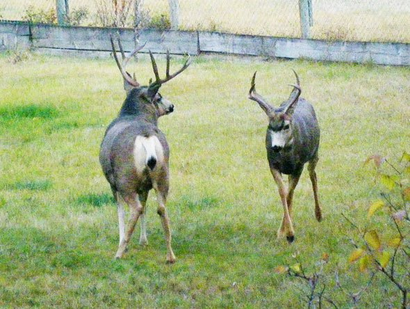 Partial cost of deer lawsuit awarded to district