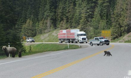 No stopping zone in place for Kootenay National Park